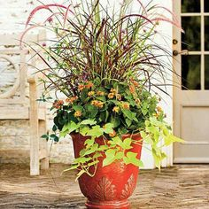 Love! Fountain grass, verbena, potato vine