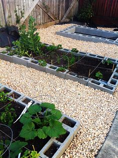 to Make a Raised Bed Garden Vegetable garden using cinderblocks for raised beds.Vegetable garden using cinderblocks for raised beds.