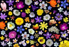 Monterey+wildflowers+sm.jpg (792×545)