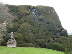 Wonderfully ancient Powis Castle hedges