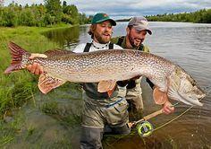 Alaskan Pike fly fishing