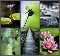 """Pond Collection"" set of six 4x6 prints - instant decor!"
