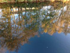 Lac de Gassicourt #manteslajolie #seine