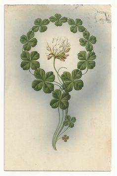 2339), Kleeblätter mit Blüte, 1909 | eBay