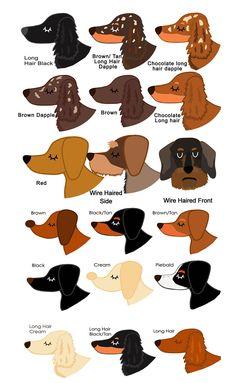 Dachshund Coats / Dachshund Colors / Dachshund Patterns / Dachshund Diversity / Weenie dogs / Sausage dog / Dachshund love / Dachshund puppies / Doxie / Dackel / Pet / Funny Pets  / Mini Dachshund / Wiener Dog / Dog / Dogs / Teckel / Animals  / Weenie Dogs / Pets / Dachshund Dog /  Dachshund / Dachshunds / Miniature Dachshund / Entertainment .... #dachshundaddict #dachshund #dachshunds #sausagedog #wienerdog #weinerdog #doxie #miniaturedachshund #pets #cutepuppies #dachshundcolors… Piebald Dachshund, Mini Dachshund, Dachshund Puppies, Pet Dogs, Pets, Miniature Dachshunds, Weenie Dogs, Pet Life, Dog Coats