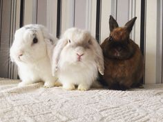 Dany, Andy and Twix  Bunny, rabbit