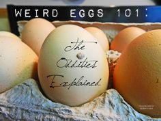 Yellow Birch Hobby Farm: Weird Eggs 101: The Oddities Explained