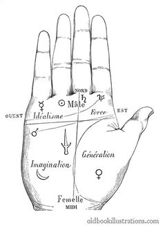 Palmistry, Division of the Hand