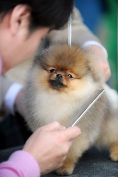 Dog Grooming Styles | Dog Haircut StylesNew Haircut Picture