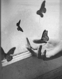 Brassaï, Butterflies by the window