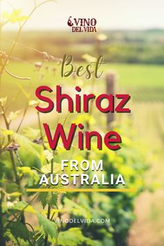 Do you like trying new wine that's not made in your country only? Austalia makes some excellent shiraz wine that you definitely should try next, and no, you don't really have no go there to drink it, but here is how to get the best bottles of Shiraz Wine that are definitely worth a try. #vinodelvida #shirazwine #shirazwinepairing #shirazwinebottle #shirazwinedrinks #shirazwineaustralia #shirazwinelabel #shirazwinerecipes #shirazwinesangria #shirazwinepairingfood #shirazwinered Shiraz Wine, Sangria, Wines, Red Wine, Bottles, Australia, How To Get, Good Things, Drink