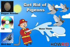 How get rid of pigeons from balcony and roof? How to scare pigeons? Get rid of pigeons on the roof naturally. Pigeon repellent to get rid of pigeons.