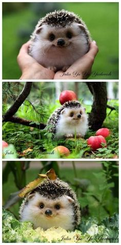 Omg happy hedgehog. Pretty sure it's a stuffed toy, but still cute as anything