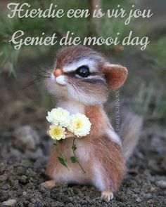 Good Morning Messages, Good Morning Wishes, Cute Cartoon Animals, Cute Animals, Lekker Dag, Afrikaanse Quotes, Goeie More, Morning Blessings, Inspiring Art
