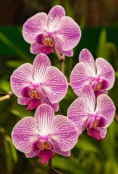 The Basics of Caring For Orchids