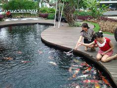 Fish feeding at Ojiya Serenity Pond, Downtown Walk area.