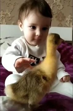 Pure Sweetness!! Cute baby boy stroking an adorable baby duck #animallove #cuteness #babylove