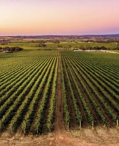 Our full range of products are inspired by the beauty and uniqueness that is Australia. They all feature beautiful botanical ingredients that have been sourced directly from Australian growers and producers making @mainebeachofficial products truly special to use. . . Thank you @__serio__ for this stunning photo of @mclaren_vale . Vineyard, Range, Australia, Inspired, Outdoor, Inspiration, Beauty, Beautiful, Products