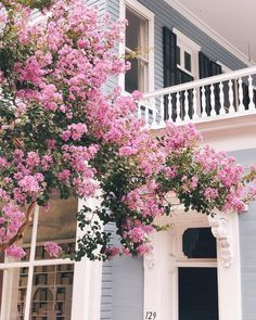 Crepe Myrtle in Charleston