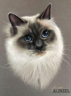 Big Cats Art, Cat Art, Cat Drawing Tutorial, Birman Cat, Cute Cats And Kittens, Pretty Cats, Cute Funny Animals, Rock Art, Animal Drawings