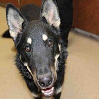 Upland, California - German Shepherd Dog. Meet A049809, a for adoption. https://www.adoptapet.com/pet/20989013-upland-california-german-shepherd-dog-mix