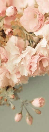 (via ♥ peaches and cream ♥ / Blossoms)