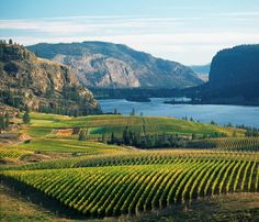 Kewlona BC - The Okanagan Valley is like a little bit of European Countryside dropped down into Canada
