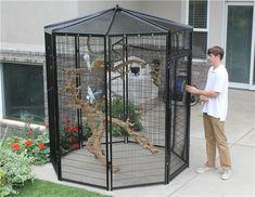 Cheap Dog Boarding Near Me Small Bird Cage, Pet Bird Cage, Bird Cages, Small Birds, Macaw Cage, K9 Kennels, Conure Bird, Flight Cage, Bird House Kits