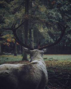 ↟ find more pics by Woodland, wilderness and cabins right here ↟ Forest animals. Some of the most beautiful creatures. First animal is a female moose. Potnia Theron, Yennefer Of Vengerberg, Wood Elf, Fantasy, Forest Animals, Fauna, Dragon Age, Beautiful Creatures, Enchanted