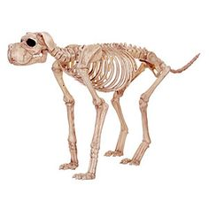 Fake dog skeleton is the perfect accompaniment for your skeleton on the porch. Just attach a collar and leash for the full effect.