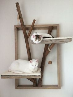 From scratching posts and climbing trees for cats, Sheila E, Cat Shelves, Cat Playground, Cat Room, Cat Wall, Cat Friendly Home, Space Cat, Cat Crafts, Cat Tree