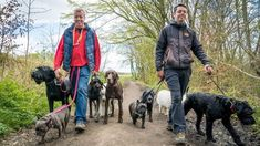 Dog Training For Humans – 'Worry Free Dog Walks' –How to enjoy more focus, more fun (and less stress) on your daily dog walks. Is walking your dog stressful andfrustrating? Do you love your dog dearly butwishhe listened to you when he is off lead? Do you feeljealous when you see other dog ...