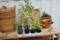 Perennials Perennials, Gardening, Plants, Garten, Flora, Plant, Lawn And Garden, Perennial, Planting