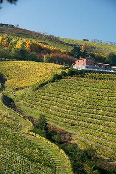 Vinedos de txakoli. Txakoli vineyards. Zarautz. Basque Country. Spain. © Iñaki Caperochipi Photography
