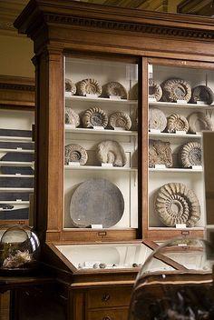 Ammonite Fossils - Teylers Museum, Haarlem