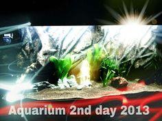 My Aquarium 2013