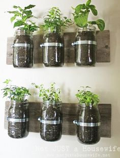 Mason Jar Wall Planter {mason jar} ~ Learn how to create an adorable indoor or outdoor wall planter. These jars would look so cute on a kitchen wall filled with herbs! You can make your own wall planter by using mason jars, an old board, and pipe clamps. Mason Jar Herbs, Mason Jar Herb Garden, Pot Mason Diy, Mason Jar Planter, Herbs Garden, Pots Mason, Garden Terrarium, Diy Herb Garden, Mason Jar Shelf