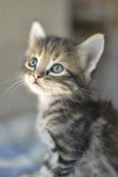 cute kitten Plz Repin, Like or Follow!