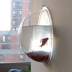 Why hang a crummy poster print in your pad when you can have a Hanging Fish Pod ($30) from Postmodern Pets. It sticks out only 5 inches from the wall and holds about a gallon of water — perfect for a couple goldfish or a betta.