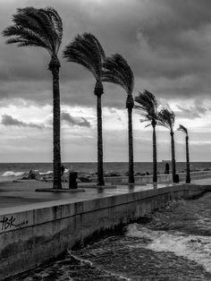 Torrevieja  | Cerca de Zenia Boulevard | Alicante | Spain