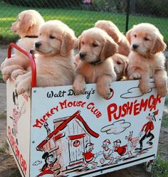 Oh man, how I love a box of puppies!