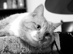 Fluffy still not tired by Loreta Tavoraite on YouPic Be Still, Tired, Canon, Animals, Cannon, Animaux, Animales, Animal, Dieren