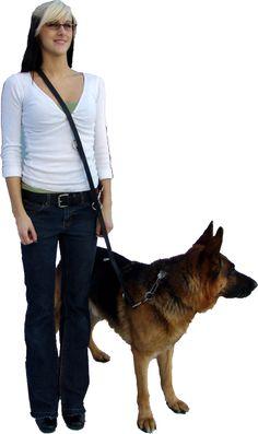Working Service Dog - Hands Free Service Dog Leash