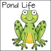 pond activities