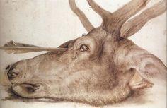 puszcza:  Head of a Stag Shot With An Arrow, Albrecht Dürer