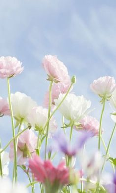 Download 480x800 «Delicate flowers» Cell Phone Wallpaper. Category: Flowers