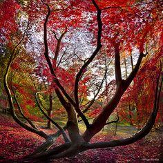 tree of life / Nigel Burkitt