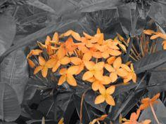 expo flores de holambra em salvador iquisória