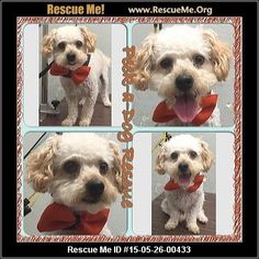 Animal ID: BurtBurt (male)  Maltese Mix    Age: Young Adult  Compatibility:	 Good with Most Dogs, Good with Kids and Adults  Personality:	 Average Energy  Health:	 Neutered, Vaccinations Current            Animal Location:  Peek-a-Dog Rescue Los Angeles County South Gate, CA MAP IT!  Contact:	 Peek-A-Dog Rescue 323-567-2860    Facebook:		   Email to Friend  	   Problems/Corrections  	   Mark As