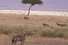 Tips For Kenyan Safari